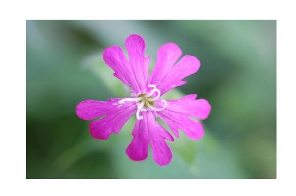 Wild Flower by mollye