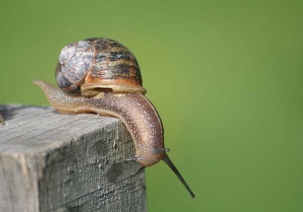 Snail by Leightonhs