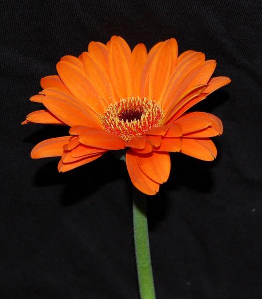 orange flower by ian_b