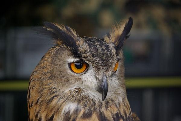 Owl by stanir