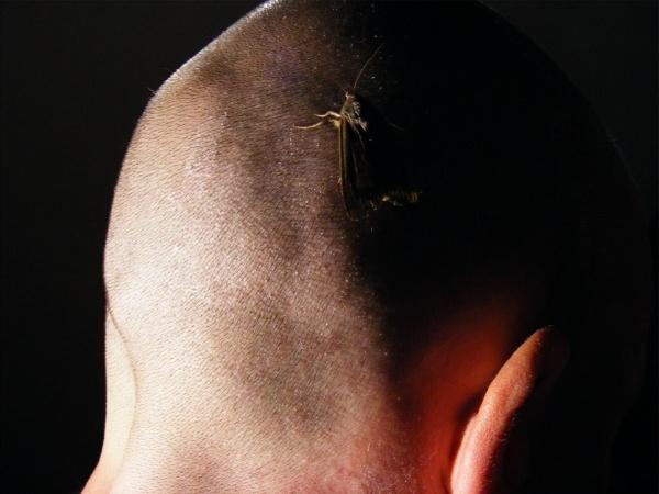 Moth on head self portrait by puffant