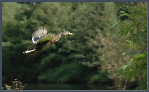 Fly Like A Bird by Cormy