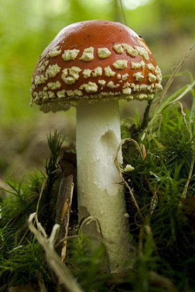 Mushroom by wheresjp