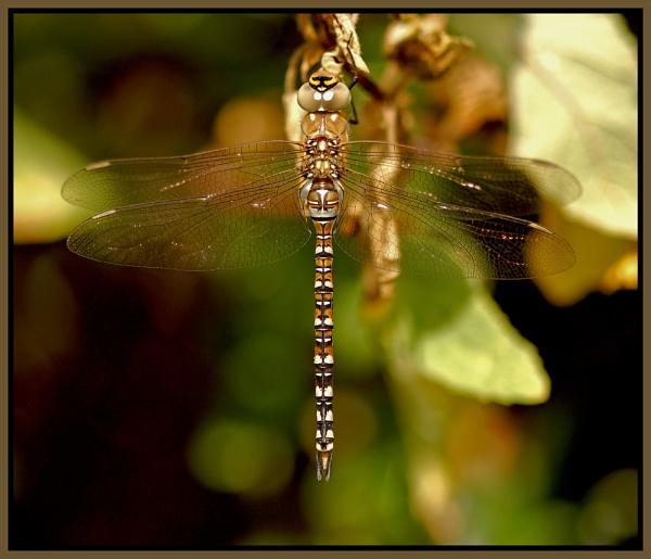dragon fly by ducatifogarty