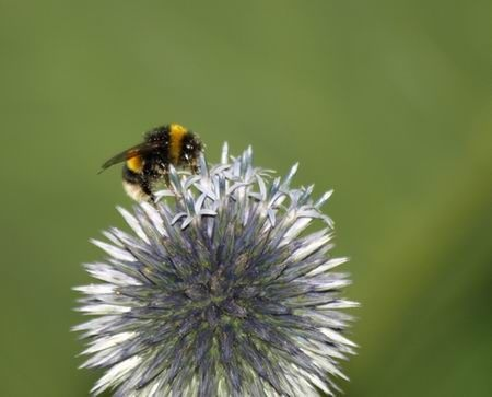 The Bee at work by mike_kend