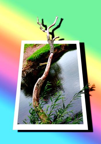 Tree by hasu