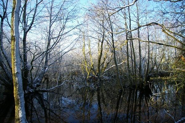 still waters by Mynett