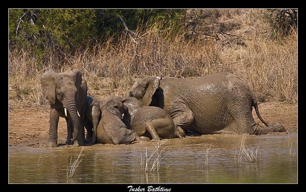 Tusker Bathtime by old timer