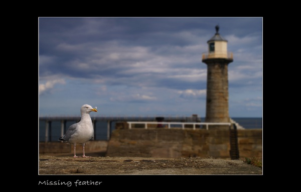 Missing feather by C_Daniels