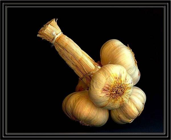 Garlic by JudeC