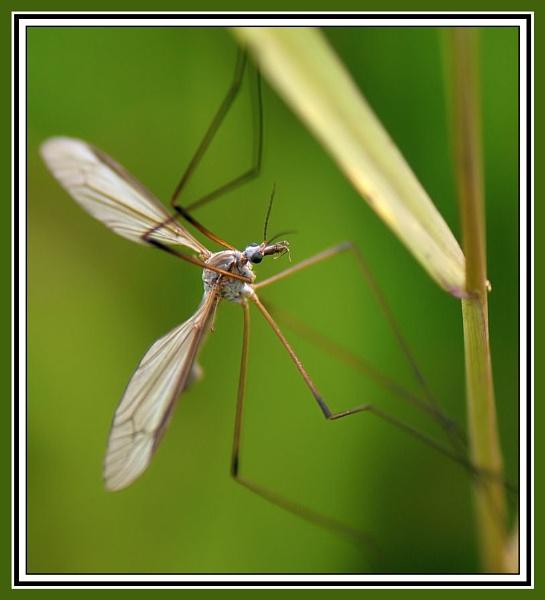 crane - fly by dden