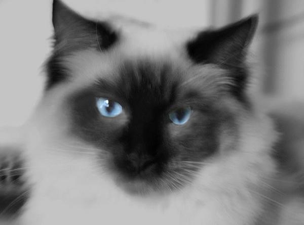 Blue Eyes by CornishEyes