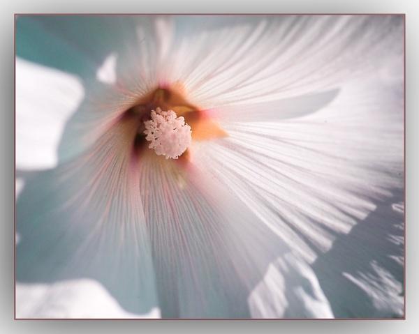 flower by carrot_heid