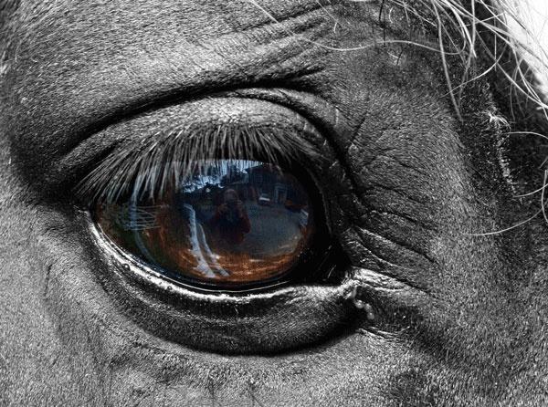 Jacks eye by Macnibbler