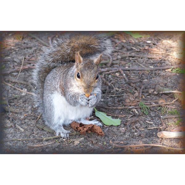 squirrel by mollye