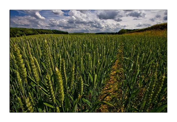Pre-Harvest by Stewy