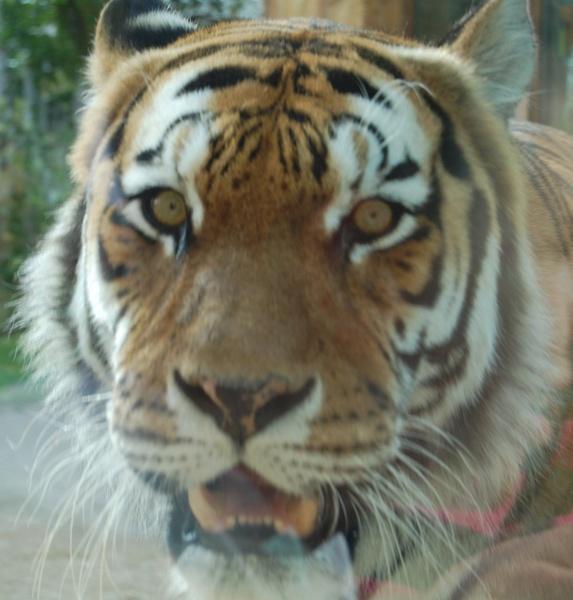 easy  tiger by ian_b