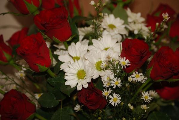 roses by Lindaephotozine