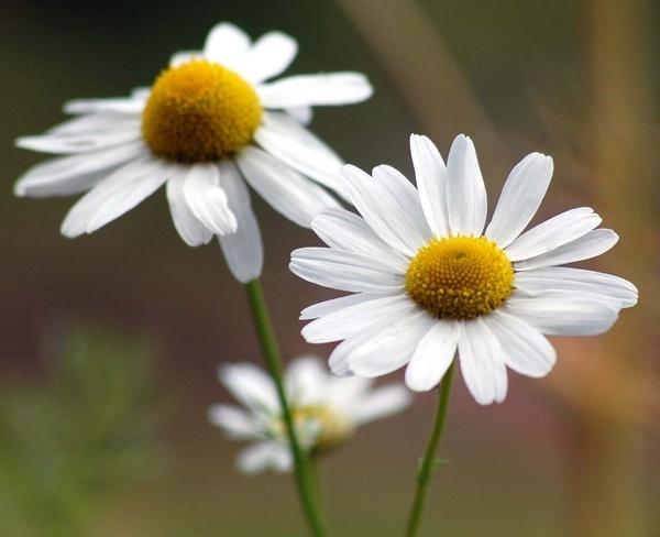 flowers by pentony