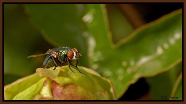 the fly by ducatifogarty
