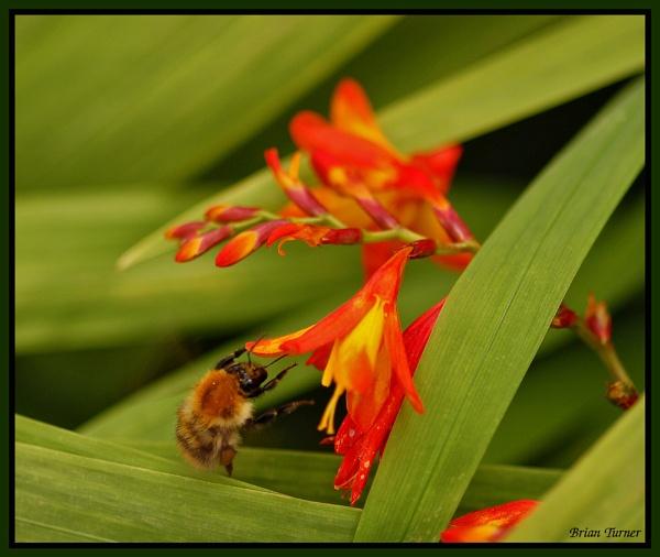 bee by ducatifogarty