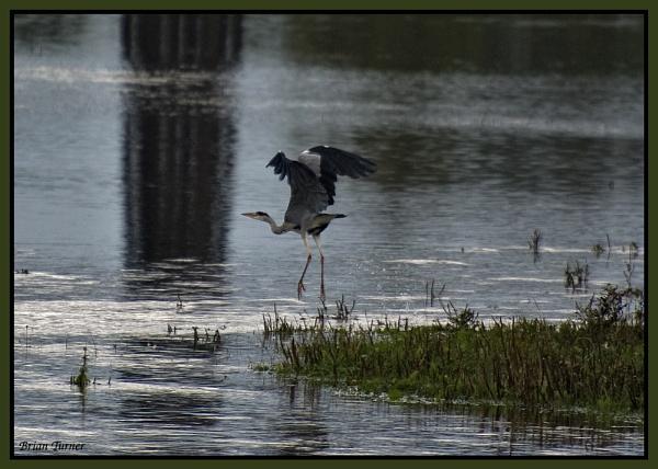 walking on water by ducatifogarty