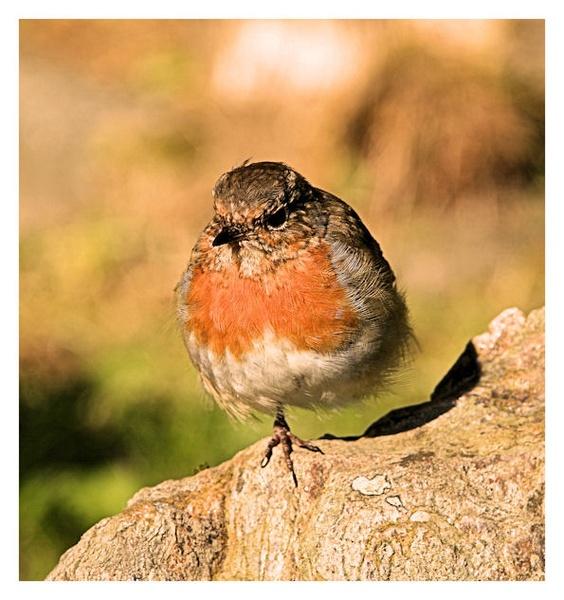 one legged robin by Ando