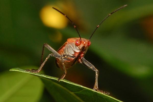A Red Bug On A Leaf by konu