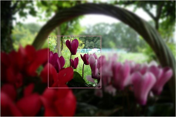 Flower basket by WimdeVos