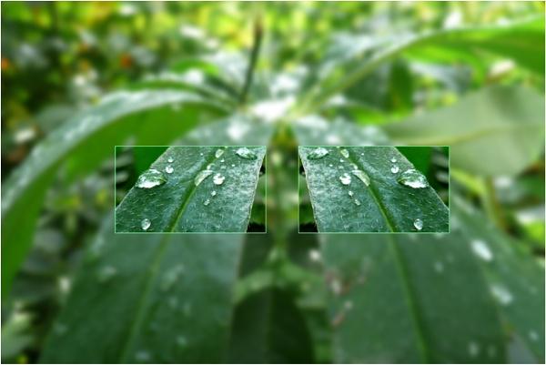 plants by WimdeVos