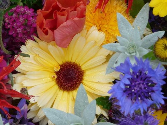 Flowers colours by benteb