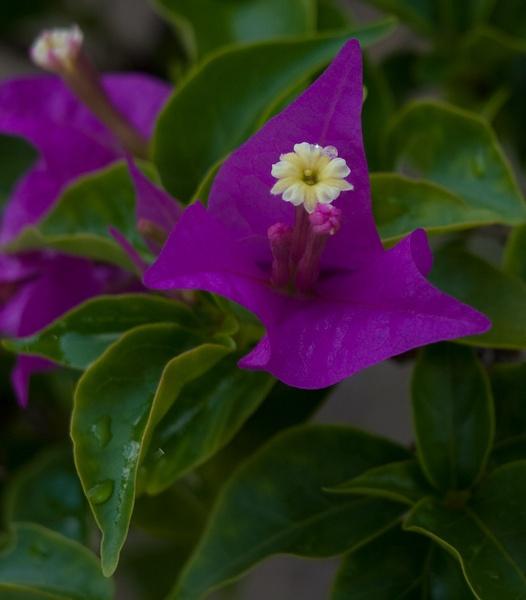 Purple... by blumonkey