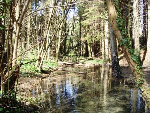 Still waters run shallow! by Wallybazoom