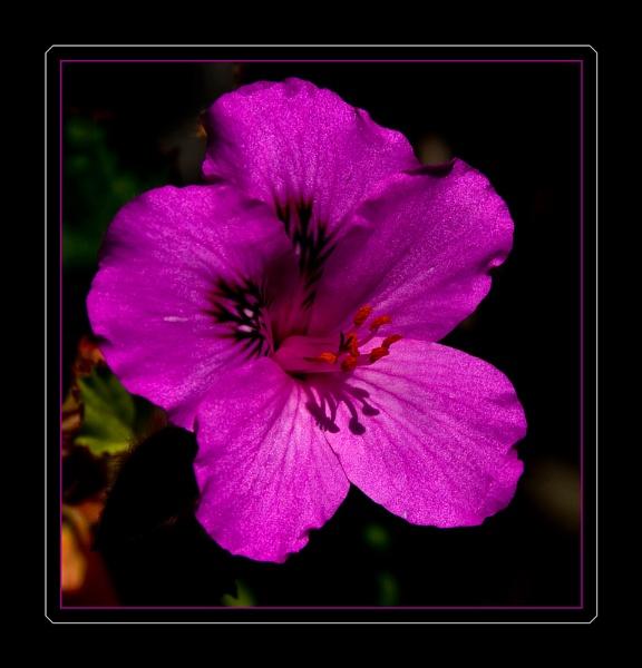 Roadside Flower by Alan_Baseley