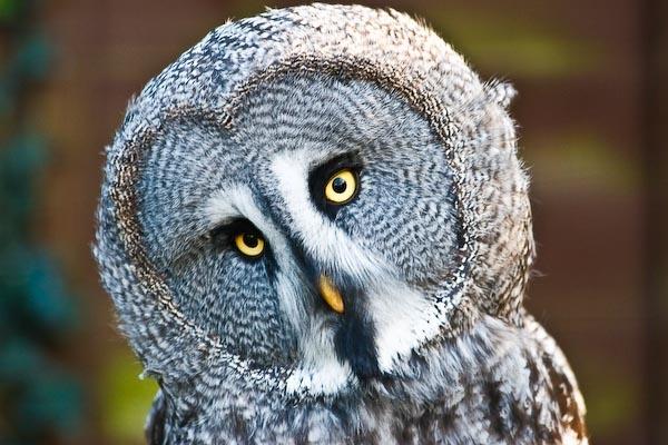 Eye Contact by daweska