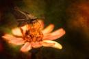 Summer Garden by donnaree