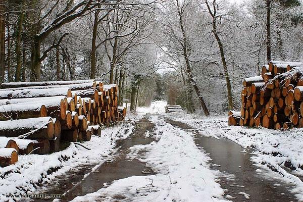 Snowy Hampshire Woodland by dasantillo