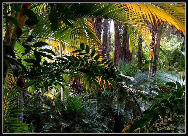 Jungle Book by glassmaker