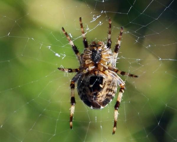 Spider by mark116