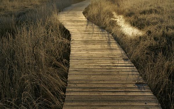 Boardwalk by jinstone