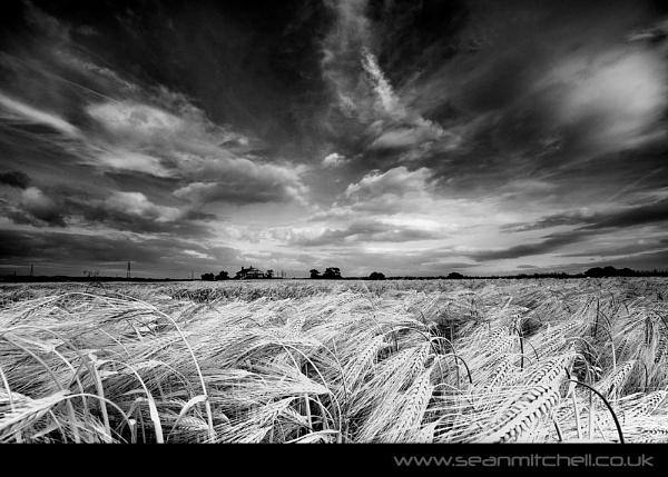 Clouds & Barley by wamp