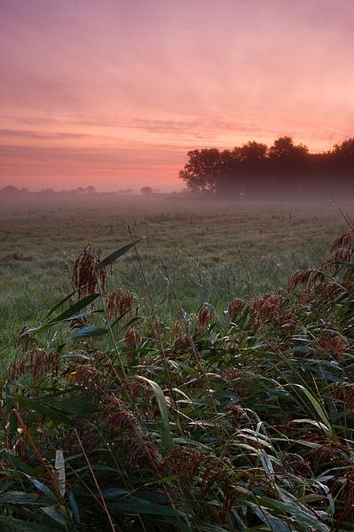 Misty Morning by kennyoak