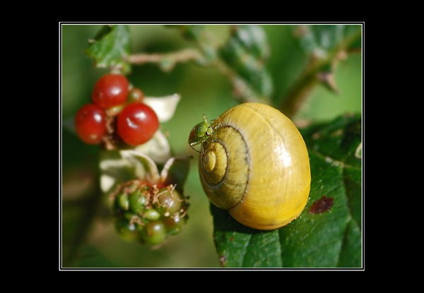Snail, bug \'n\' berry by BEVZED