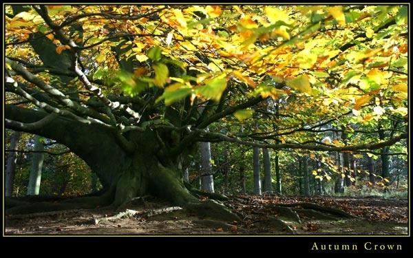 Autumn Crown by 11thearlofmar