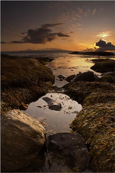 Molluscs at Murlough Bay by Goggz