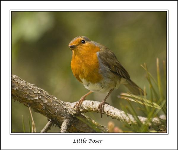 Little Poser by Valerie1
