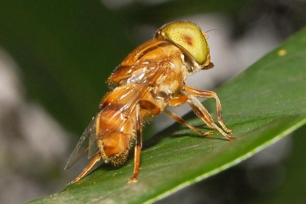The Back Of A Fly by konu