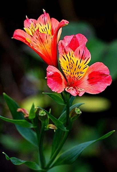 Unknown Flower by Tony_B