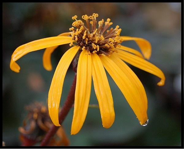 Bright Yellow Flower by mrsvee