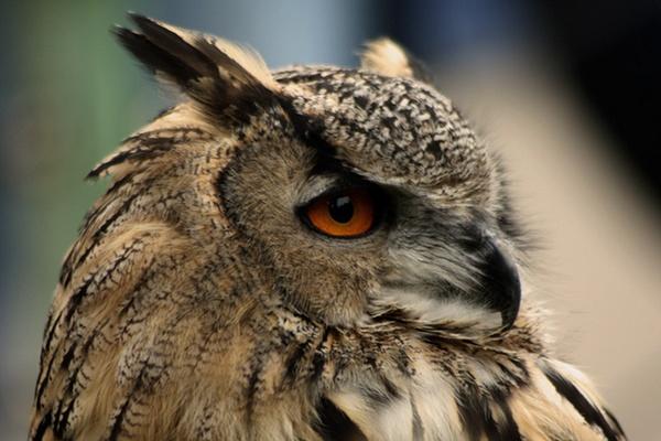 Owl Eye by liparig
